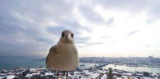 Погода в Стамбуле в январе