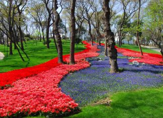 Фестиваль тюльпанов в Стамбуле: парк Эмирган