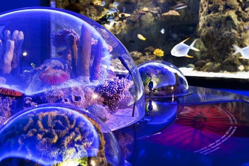 Аквариум Флория: лучший океанариум Стамбула. Цены, как доехать