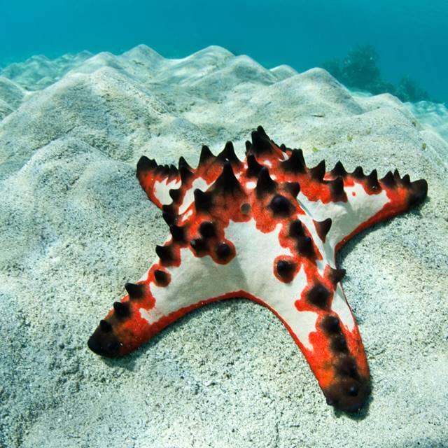 Морская звезда в океанариуме