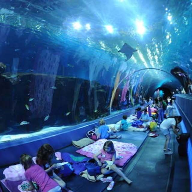 Аквариум Sea Life в Стамбуле